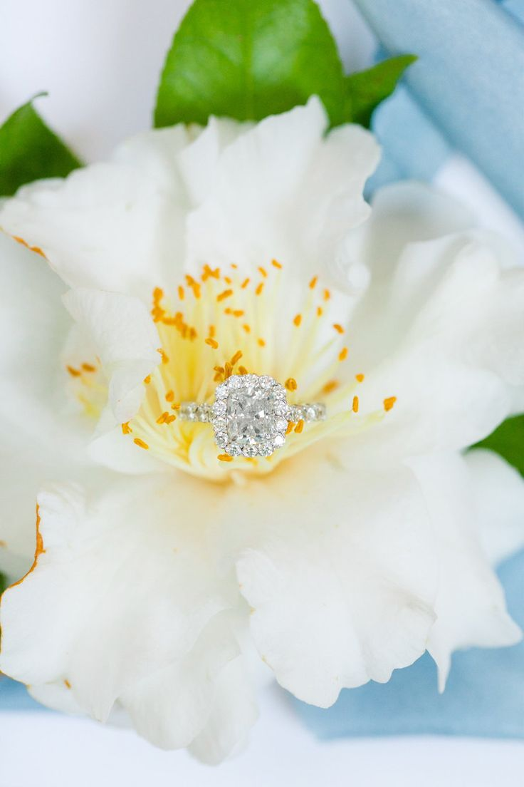 Cushion-cut engagement ring in a halo setting: Photography: Dana Cubbage - danac...
