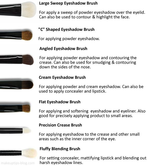 Eyeshadow Brushes: When it comes to eye brushes the amount of different bristles...